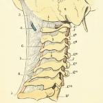 cervicales-post
