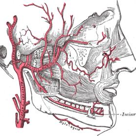 migraine-vasculaire