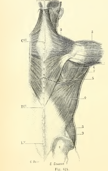 Osteopathy-lower-back